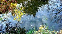 Cores de outono nas proximidades de Sevastopol, Ucrânia