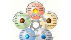 Os cinco elementos e o corpo humano