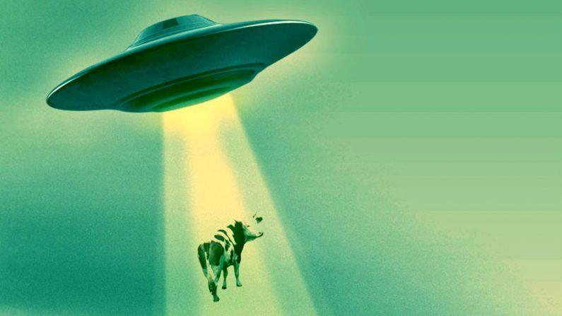 Audiência de divulgação sobre alienígenas mostra video de abdução de gado