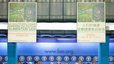 FAO: Preço mundial dos alimentos deve continuar volátil, apesar da estabilidade no mercado
