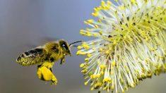 Plantas de jardim pré-tratadas com pesticidas estão matando abelhas