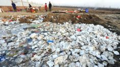 'Orgânicos' da China expostos