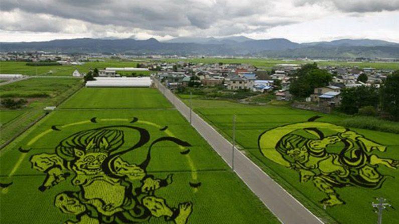Fotos da arte nas plantações de arroz