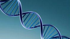 Variante genética rara pode ser causa da esclerose múltipla