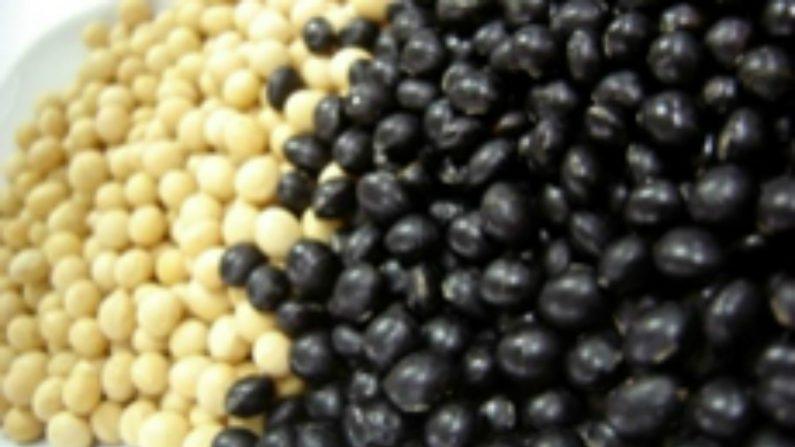 Soja preta é melhor que amarela contra envelhecimento, diz pesquisa