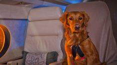 Cuidados necessários em viagem aérea com animal de estimação