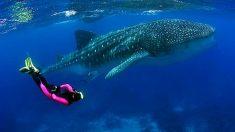 Galápagos está em alerta contra pesca ilegal de chineses