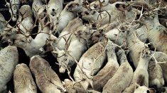 O país das renas