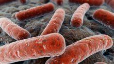 Estudo procura elemento genético de defesa contra tuberculose