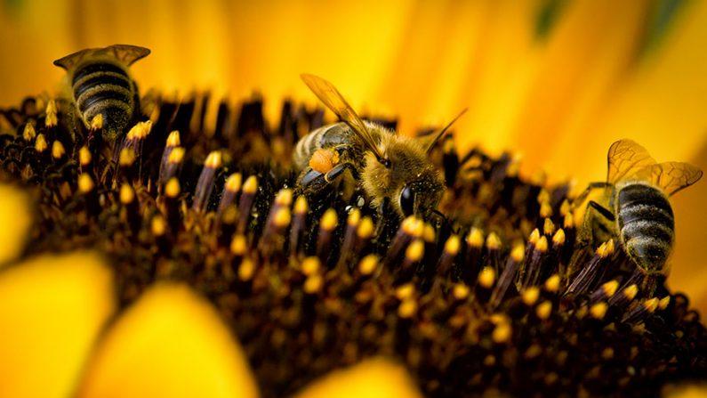 Conheça 6 plantas que atraem polinizadores