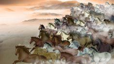 O Ano do Cavalo e histórias lendárias desse animal magnífico