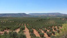 Israel, um celeiro de inovações agrícolas