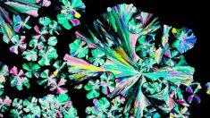 Beleza na ciência: seu alimento através do microscópio