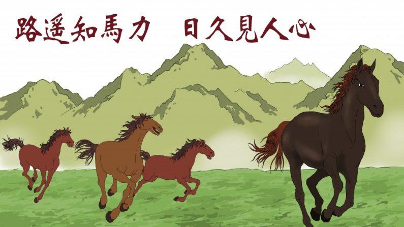 """""""Como uma longa jornada testa a força de um cavalo, o tempo revela o coração de uma pessoa"""""""