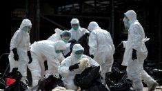 Rápida propagação de diferentes vírus da gripe na China causa pânico