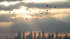 Poluição do ar: o que fazer quando se sofre de asma
