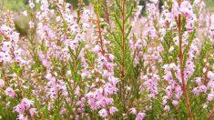 Descubra os benefícios da terapia floral