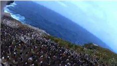 Pássaro rouba câmera e grava vídeo impressionante de pinguins