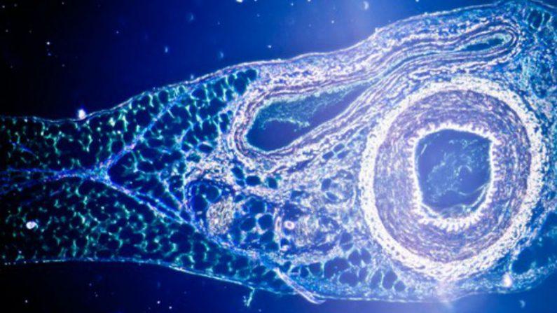 Beleza surpreendente do corpo no nível microscópico