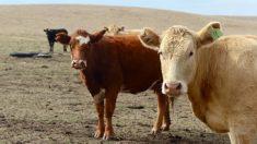 Agências governamentais não podem garantir segurança dos alimentos