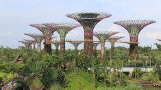 Gardens by the Bay: o Jardim futurista de Cingapura