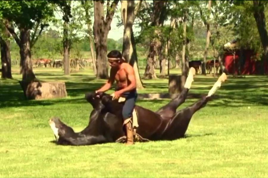 Doma India: domando cavalos pela confiança e sem violência