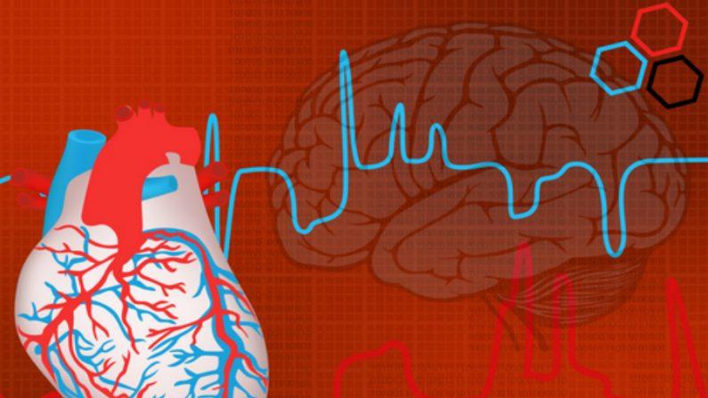 Estrutura do coração é similar à do cérebro, afirmam especialistas