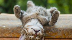 Imitação de bigodes de gato permite que robôs percebam arredores