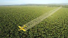 Agrotóxico pode ser o grande vilão da alergia alimentar, afirma estudo