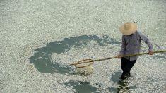 Um alerta de desespero sobre a crise ambiental na China
