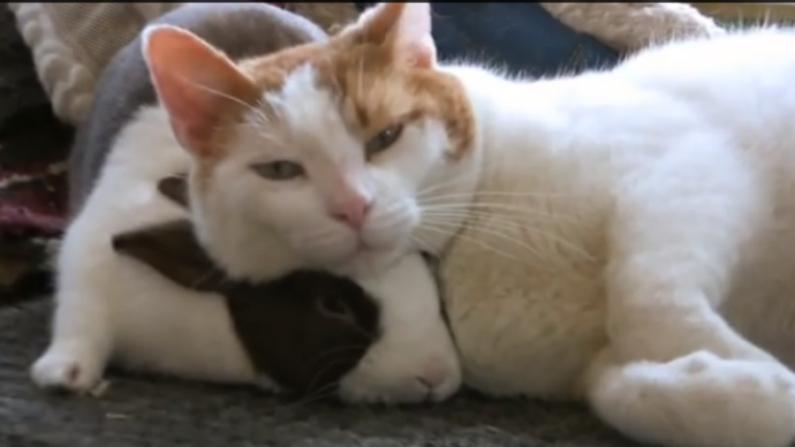 Confira vídeo de quando gatos e coelhos se tornam amigos