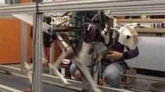 Robô-chita do MIT busca superar velocidade da chita real
