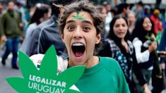 Uruguai vai abrir licitação para produzir maconha em escala industrial