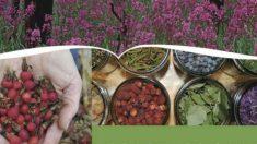 Especialista escreve sobre uso criativo e medicinal das plantas