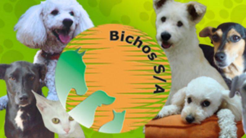 'Guia da Copa para Pets' quer ajudar donos a proteger animais durante o Mundial