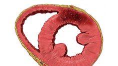 Novo método para a regeneração das células do coração