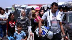 FAO alerta para situação alimentar preocupante no Iraque