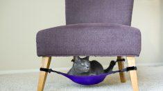 Ideias: Confortável rede-cama para seu gato
