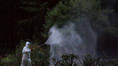 Sul da China luta contra dengue, número recorde de casos