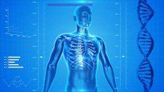 Dez fatos surpreendentes sobre o corpo humano