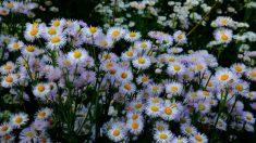 Desintoxicação e rejuvenecimento orgânico na entrada da primavera