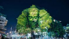 Arte em árvores reverencia os deuses no Camboja
