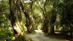 Jardim Botânico RJ preserva botânica rara e conhecimento