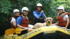 Agência oferece turismo de aventura para cães e donos