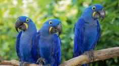 Em 40 anos, metade da população de vários animais é reduzida à metade