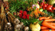 Ganhando bons nutrientes com alimentos cotidianos