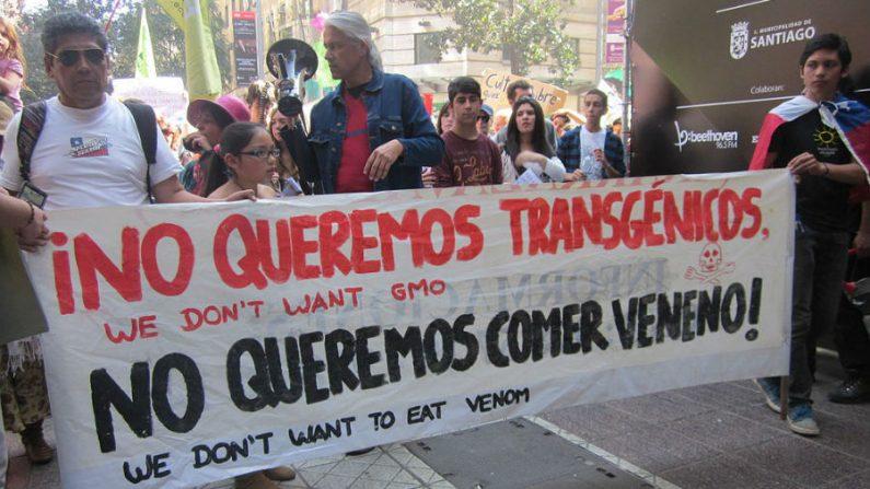 OGMs e transgênicos: 80% dos alimentos já modificados