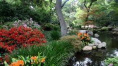 """Expressão chinesa: """"Para onde a água flui, um canal se forma"""""""