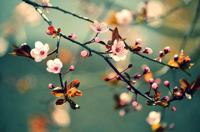 A importância do fígado na Medicina Tradicional Chinesa