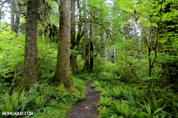 Possível extinção de minhocas põe em risco biodiversidade do solo